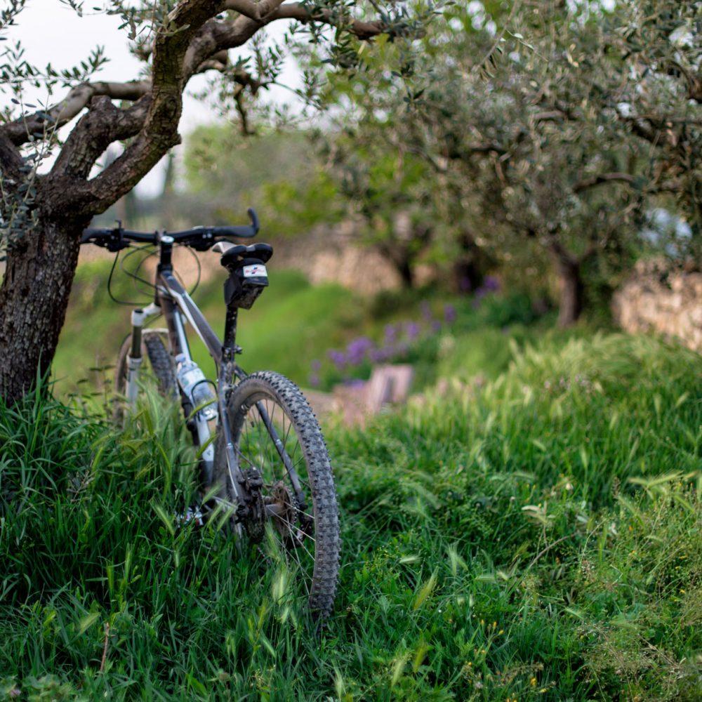 Parcourez les alentours à vélo